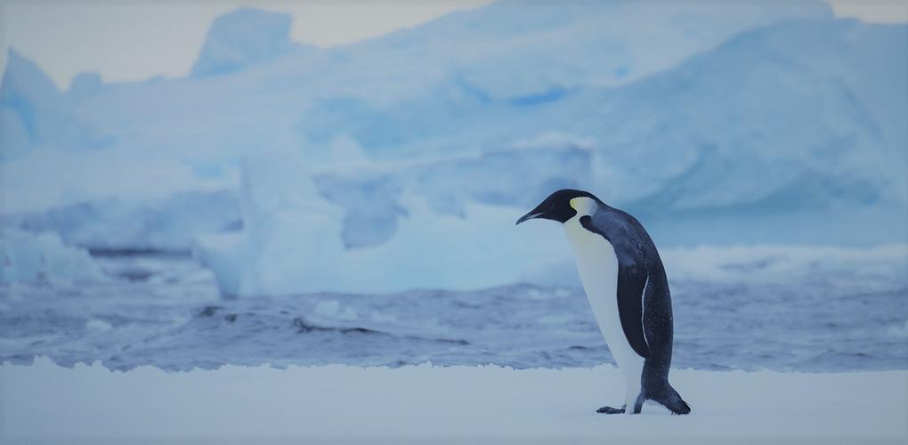 ファースト・ペンギン